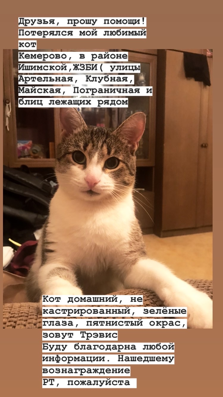 Потерялся Кот (Порода не известна)