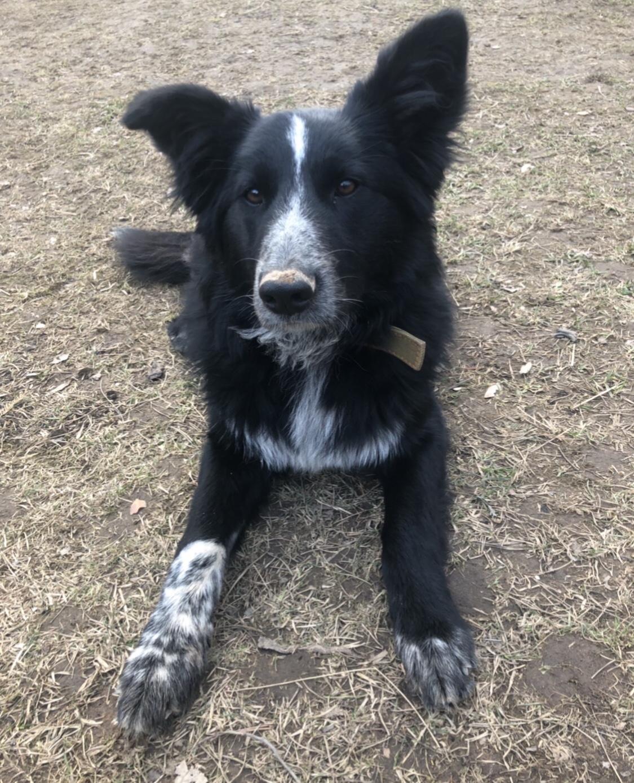Потерялась Собака (Порода не известна)