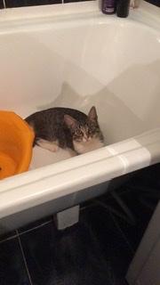 Потерялась Кошка (Порода не известна)